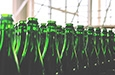 photo of rows of glass bottle tops